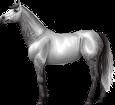 Holsteiner ##STADE## - robe 295