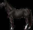 Holsteiner ##STADE## - robe 51