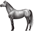 Holsteiner ##STADE## - robe 52