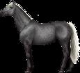 Holsteiner ##STADE## - robe 71