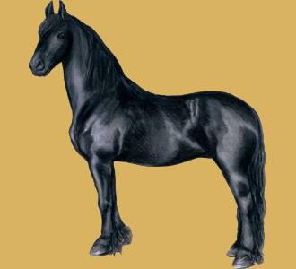 49b2045835ebe Le meilleur des jeux de chevaux   jeu de cheval virtuel gratuit !