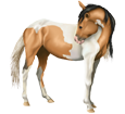 Paint horse Adulte - robe 1000000061