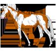 Paint horse ##STADE## - robe 1000000066