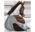 Paint horse ##STADE## - robe 1000000069