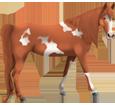 Paint horse ##STADE## - robe 1000000116