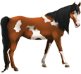 Paint horse adulte - robe 1000000117