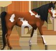 Paint horse ##STADE## - robe 1000000117