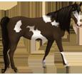 Paint horse ##STADE## - robe 1000000118