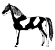 Paint horse adulte - robe 1000000120
