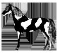 Paint horse ##STADE## - robe 1000000120