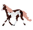 Paint horse ##STADE## - robe 1000000121