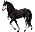 Paint horse adulte - robe 1000000160