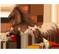 Paint horse ##STADE## - robe 195