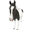 Paint horse adulte - robe 201