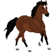 Paint horse adulte - robe 205