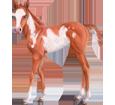 Paint horse Poulain - robe 35