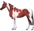 Paint horse ##STADE## - robe 35