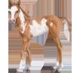 Paint horse poulain - robe 5