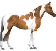 Paint horse Adulte - robe 5