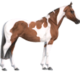 Paint horse adulte - robe 80