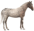 Appaloosa adulte - robe 46
