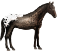 Appaloosa Adulte - robe 83