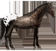 Cheval à acheter de race Appaloosa