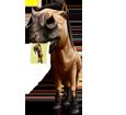 Quarter Horse adulte - robe 1000000067
