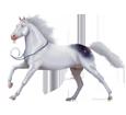 Quarter Horse adulte - robe 1000000080