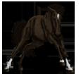 Quarter Horse ##STADE## - robe 1000000083