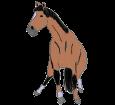 Quarter Horse adulte - robe 1000000158