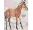 Quarter Horse poulain - robe 77
