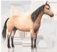 Quarter Horse adulte - robe 77