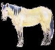 Mustang adulte - robe 1000000154