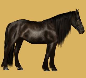 Mustang adulte - robe 26