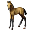 Cheval des Marquises ##STADE## - robe 20