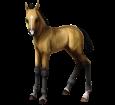 Cheval des Marquises poulain - robe 20