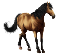 Cheval des Marquises ##STADE## - robe 86