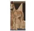Haflinger Poulain - robe 140