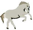 Connemara ##STADE## - robe 1000000064