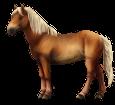 Altaï adulte - robe 140