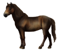Altaï adulte - robe 434