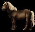 Altaï adulte - robe 436