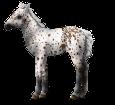 Altaï poulain - robe 459