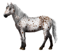 Altaï adulte - robe 459