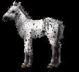 Altaï poulain - robe 460