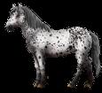 Altaï adulte - robe 460