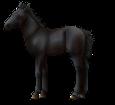 Altaï poulain - robe 51