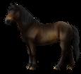 Altaï adulte - robe 62