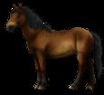 Altaï adulte - robe 76